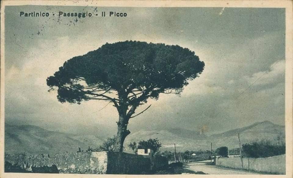Pigno 3